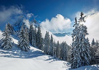Weihnachtskarte 8168 Tannen im Schnee